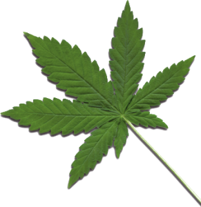 In Isael soll die Verfügbarkeit von Cannabis verbessert werden